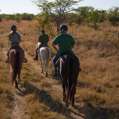 Experience wildlife up close, while on horseback