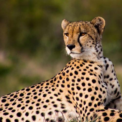 mabula-game-lodge-stay-safari-play